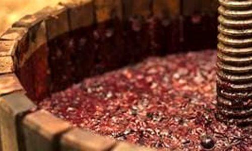 Dall'uva al vino e degustazione-Ginosa-4