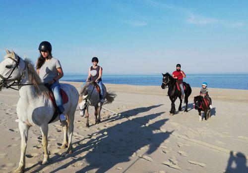 HorseVillage-Ginosa-1
