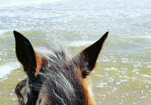 HorseVillage-Ginosa-4